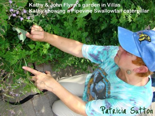 KathyFlynn w-Pipevine Swallowtail cat
